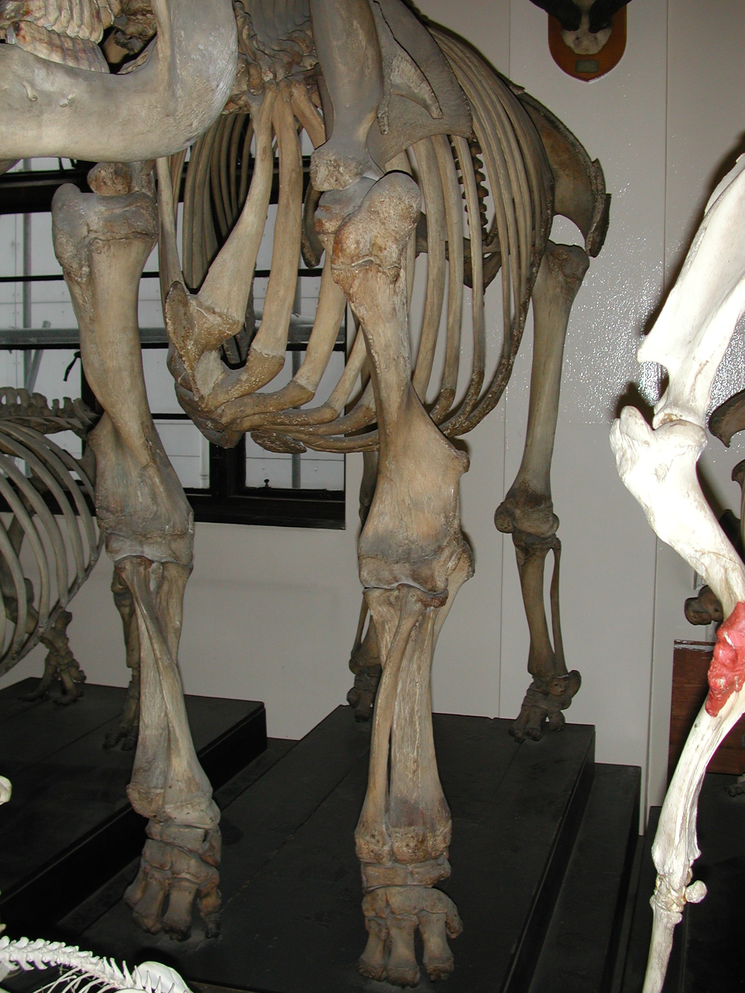 RVC\'s Lovely Little Anatomy Museum, Part 1 | What\'s In John\'s Freezer?