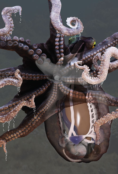 Octopus image by Mieke Roth