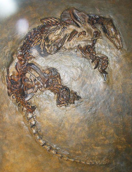 Eurotamandua fossil