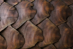 Pangolin scales closeup