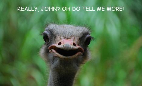 Amazed ostrich