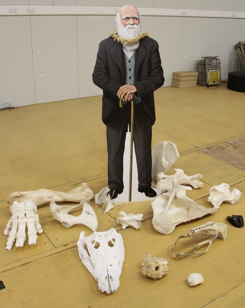 Darwin amidst the bones