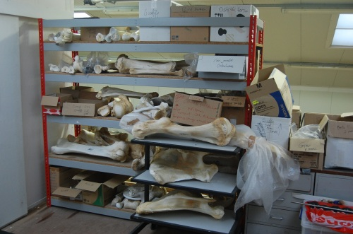 The bone shelves