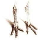 The unscaled bird: guineafowl feet.