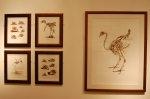 Framed sketches at Tring exhibit.