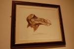 Framed sketch of dodo head at Tring exhibit.