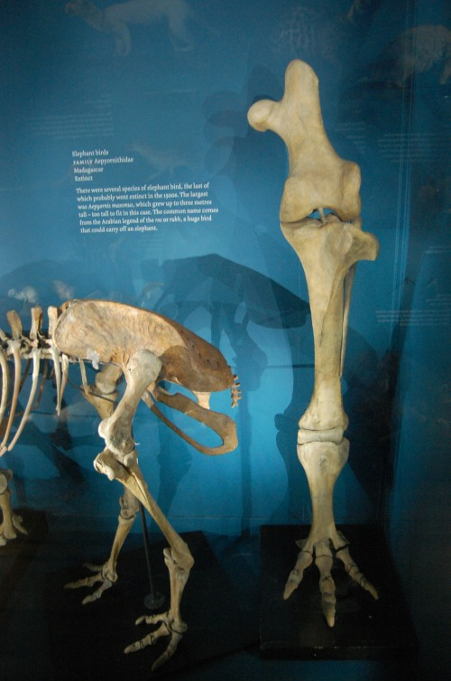 essays on extinct animal in gujarati What to write about in your endangered species essay start with reading our guide  it has been shown that the primary natural causes of the animal extinction are .