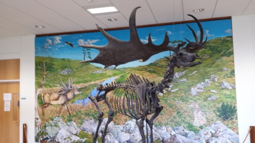Giant deer in UCD zoology building foyer.