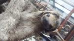 sloths (2)