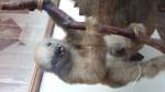 sloths (3)