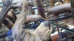 sloths (4)