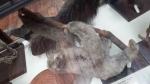 sloths (5)