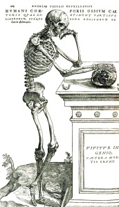 Vesalius's classic skeleton, which is great but to me also conjures misleading connotations of anatomy as a  defunct discipline.