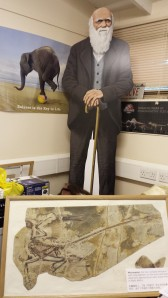 Darwin greets Chinese visitor Microraptor in my office.