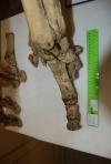 rhino-feet (3)