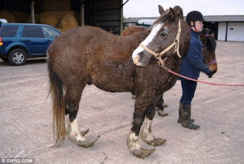 Jerry the obese, untrimmed-hoof-bearing horse.