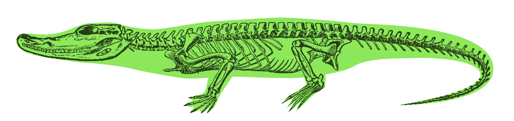 Guest Post Crocodiles From The Freezers Stiff Spines And Strong