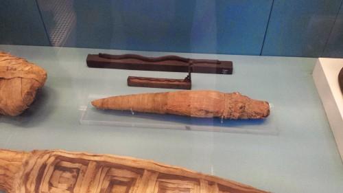 Small Nile crocodile mummy from >30 B.C, El Hiba, Egypt
