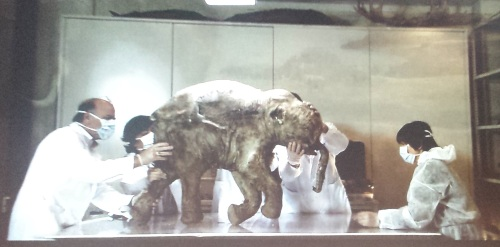 Lyuba and scientists studying her, which also shows how rigid the carcass is.