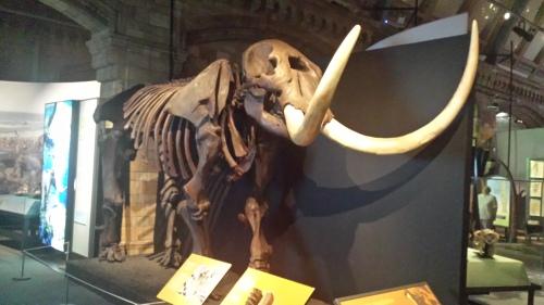 Mastodon skeleton!