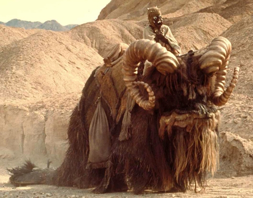 "Convincing image of a Bantha being ridden by a Sand-Person, from your world's fake documentary ""Star Wars Episode IV: A New Hope"", from Lucasfilm/Twentieth Century Fox."