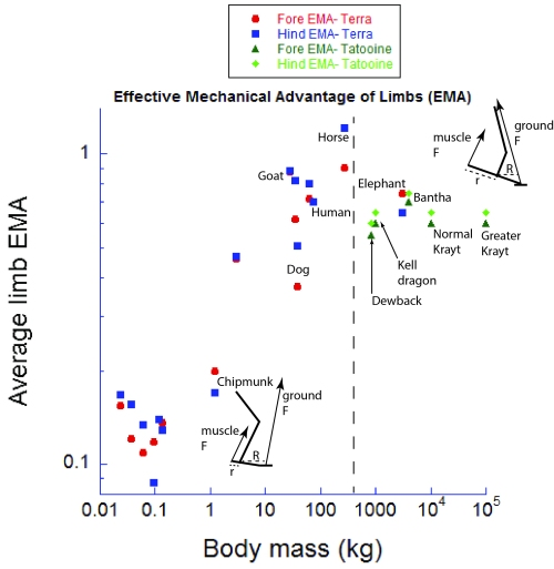 Effective mechanical advantage of the limbs, with Terran data for mammals (red+blue) (source 1 and source 2), and my new data for Tatooine megafauna. Past a moderate size, EMA either declines or remains constant. Once the limbs are fairly straight (near the size of a Terran horse), EMA cannot be much improved.