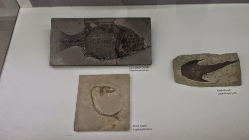 Slice of fossil fish diversity.