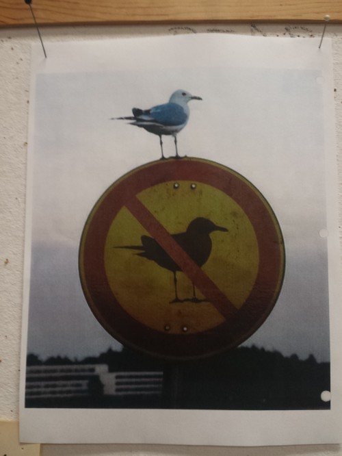 Ironic bird pic posted on the wall.
