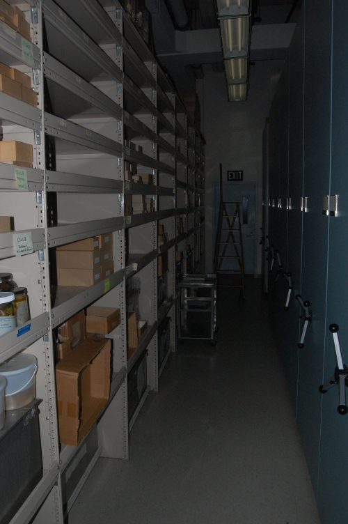 My initial look down the halls of the osteology storage. Rolling cabinets (on the right) are a typical sight.