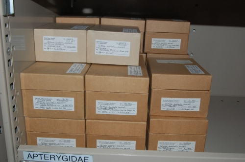 "Boxes of kiwis, oh frabjous day! A nice sample size like this for a ""rare"" (to Northern hemispherites) bird is a pleasure to see."