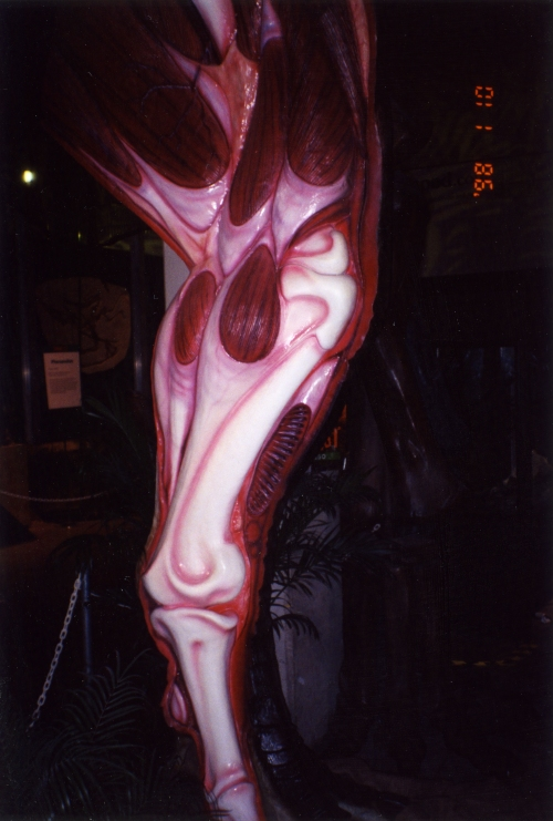 ?T. rex? leg, photo that I took ages ago as a PhD student, if memory serves. Can anyone remind me where this was? California Academy of Sciences?