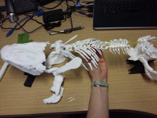 Ichthyostega 3D print is ready!